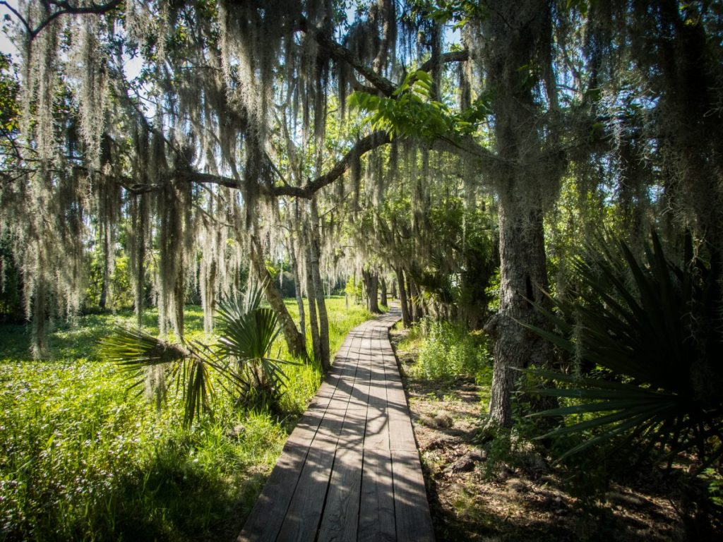 Boardwalk through swamp
