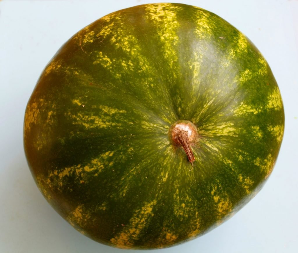 dull shiny watermelon skin