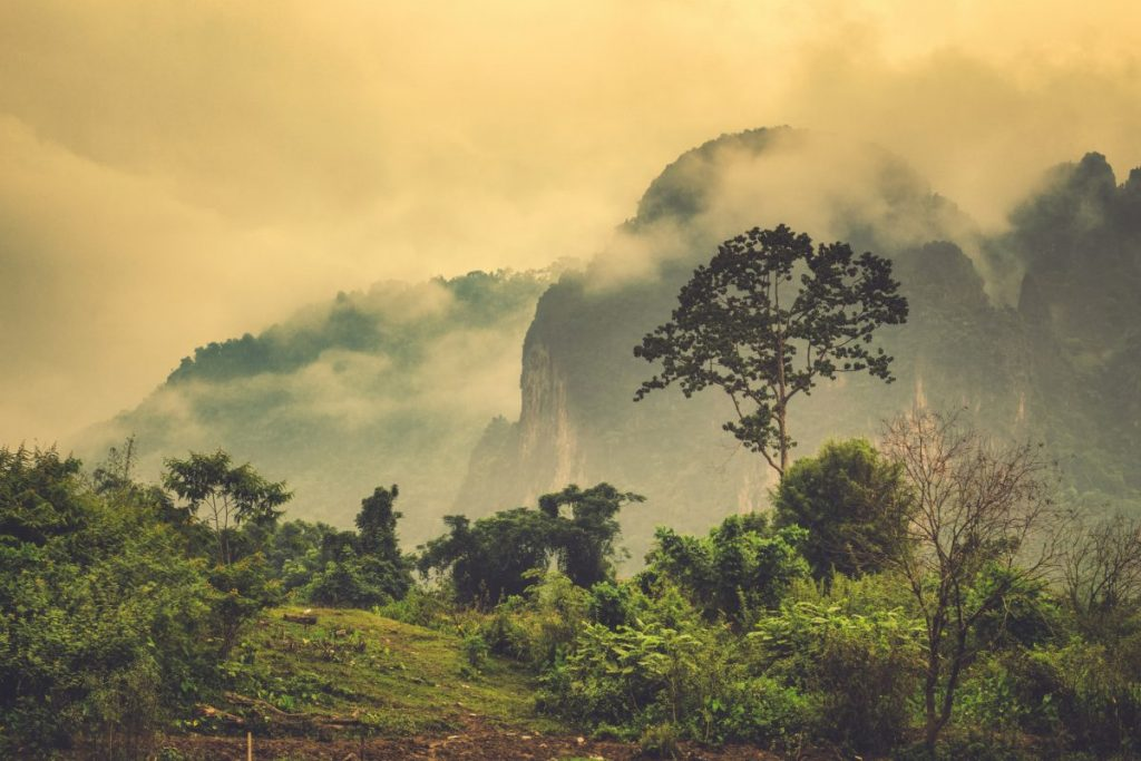 rainforest laos travel
