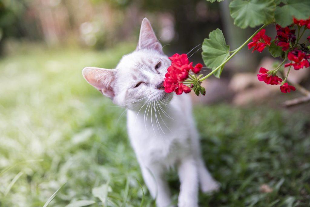 cats sneeze pollen
