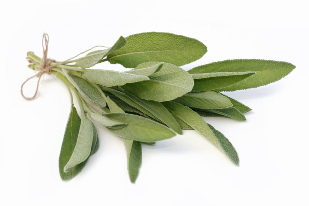 herbs sage