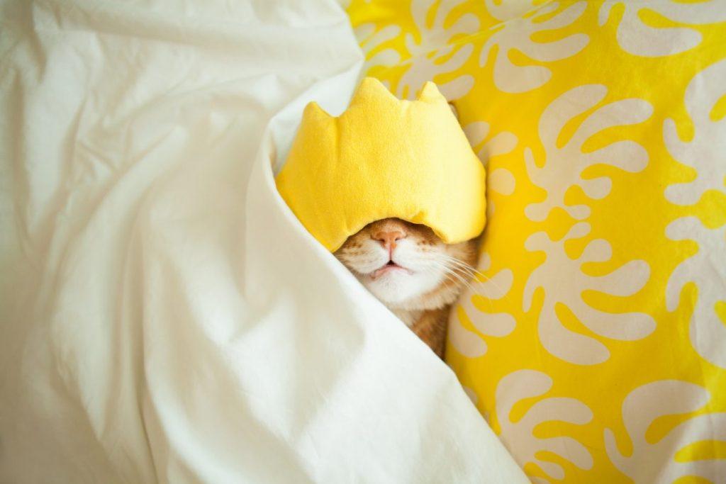 cat in eyemask