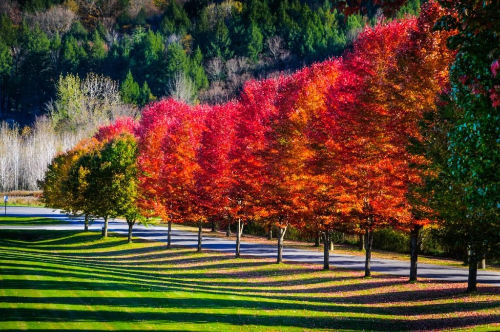 maple tree shadows vermont