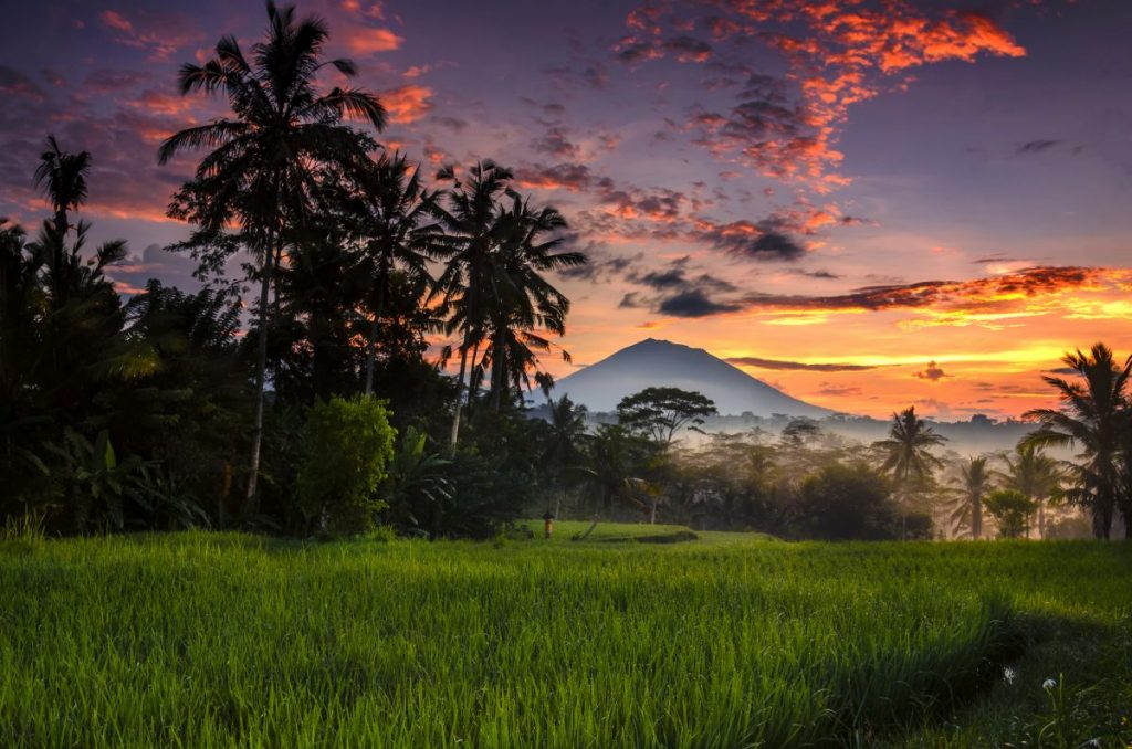 morning at ubud indonesia