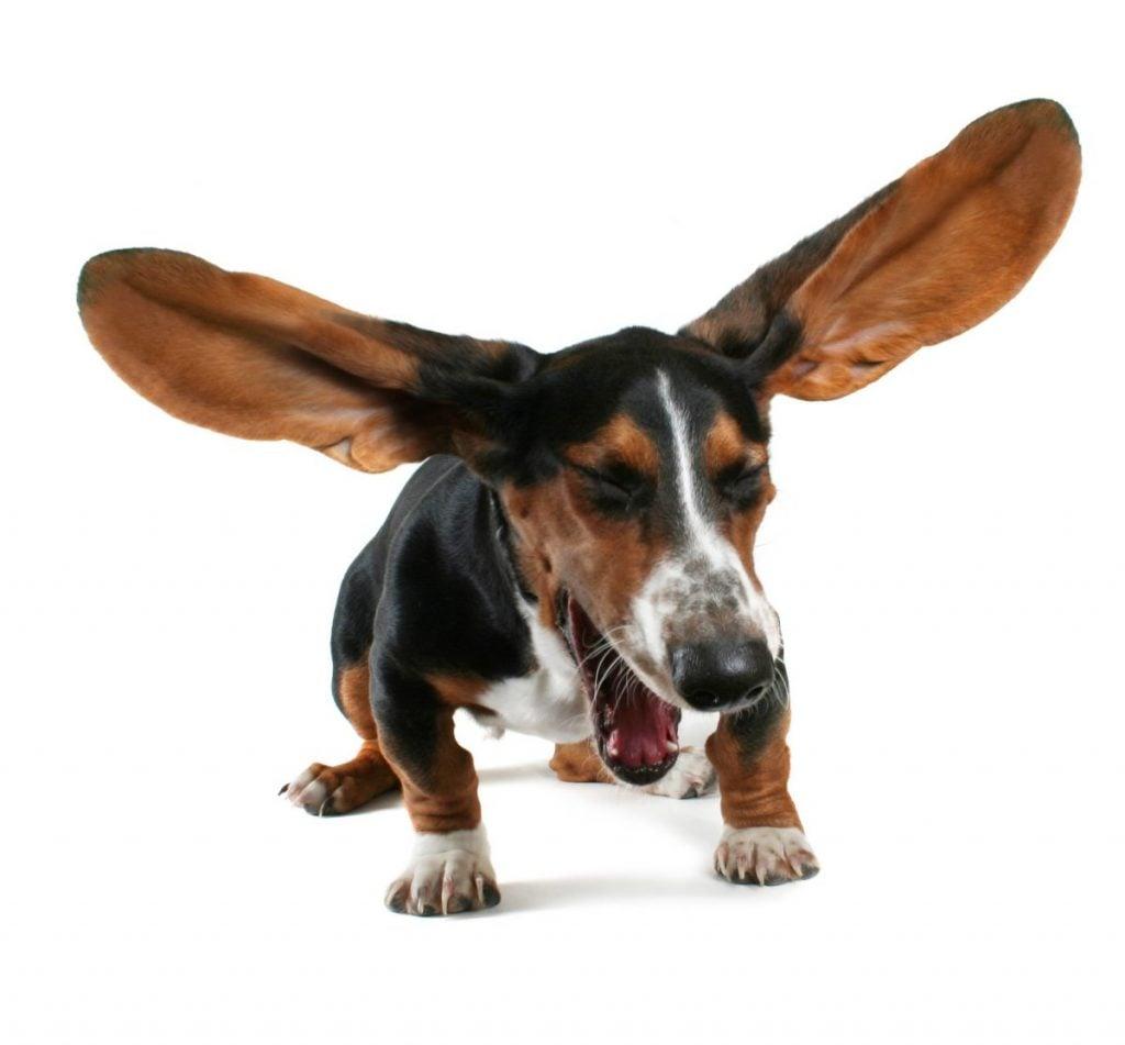 help reverse sneezing dog