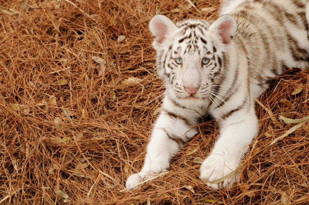 zoo animals education exotic