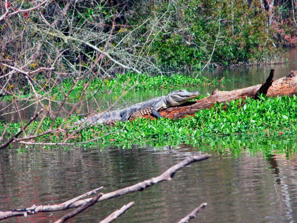 Slidell, Louisiana, Honey Island