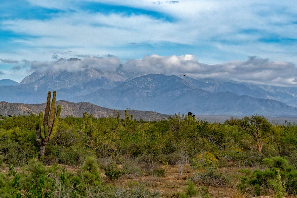 sierra de la laguna baja california sur mexico