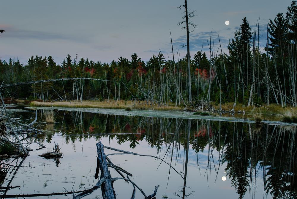 full moon beaver