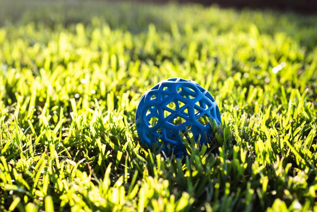 Blue dog ball in green grass
