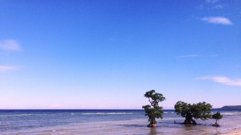pink beach phillipines