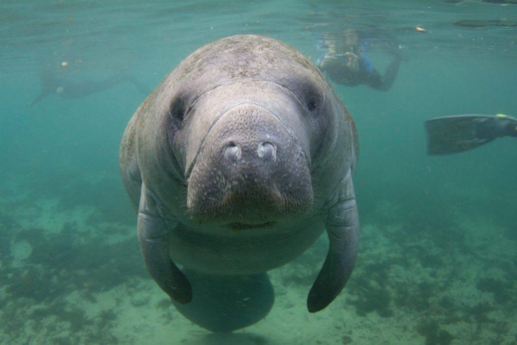 Snorkeling in Miami