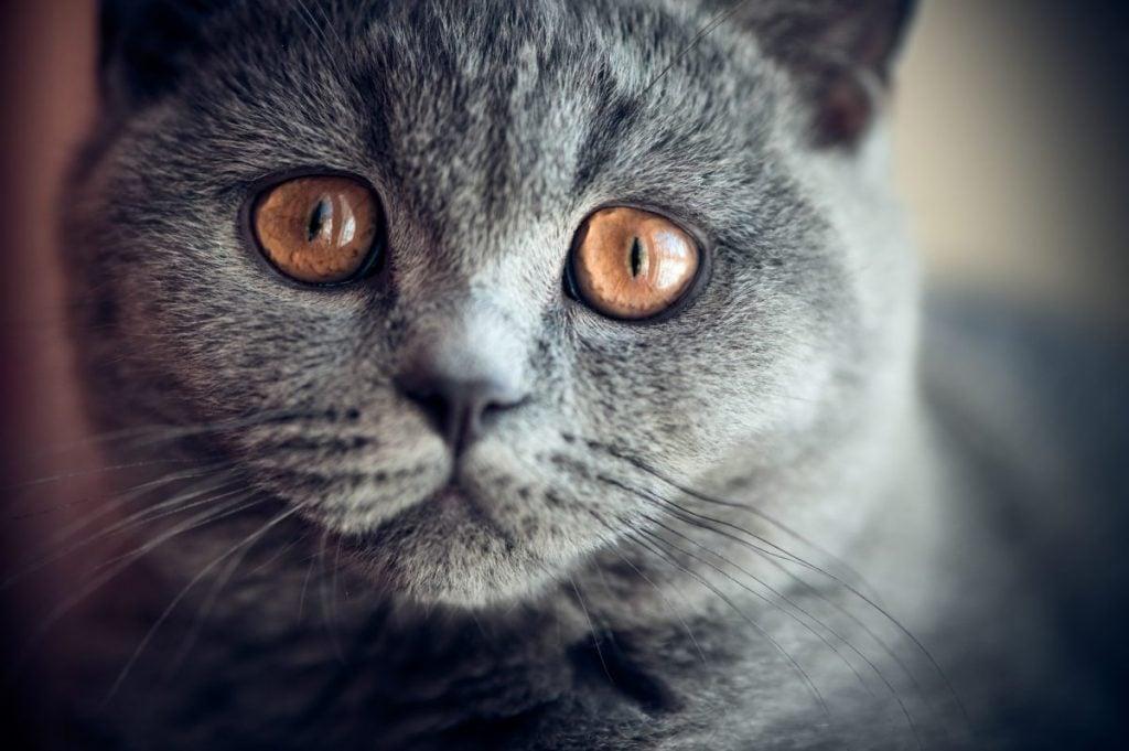 wide eyes vision feline