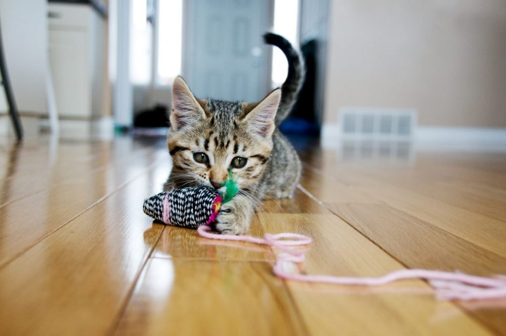 Kitten with his prey