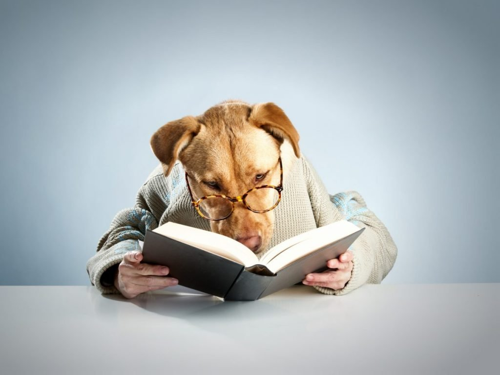 Studious dog Reading a book