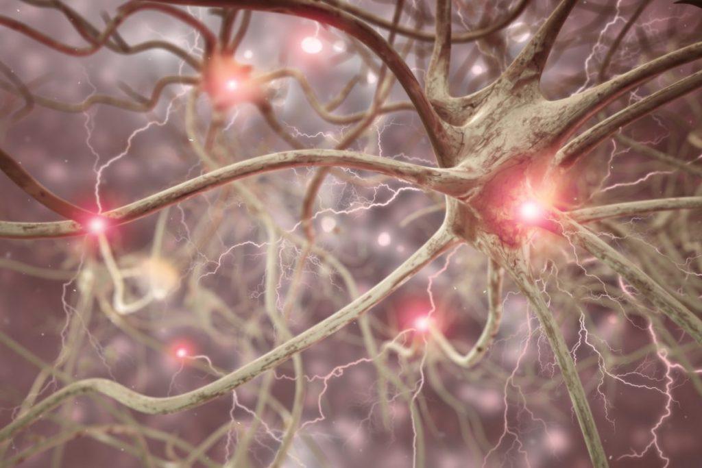 nerve cell system
