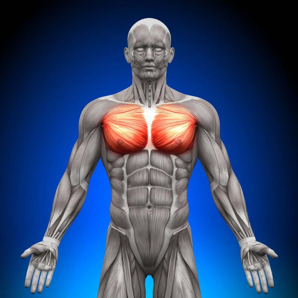 Pectoralis-minor thoracoacromial
