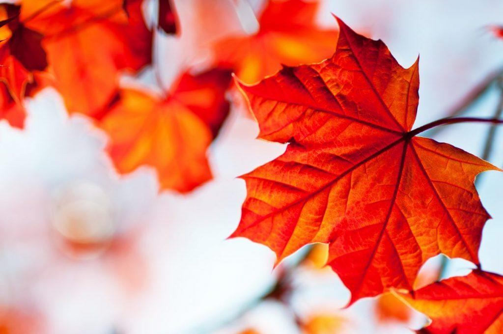 autumn leaf november