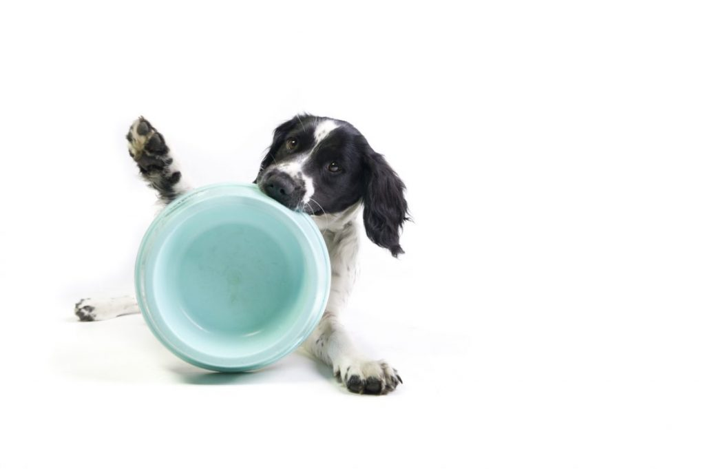 dog holding empty bowl