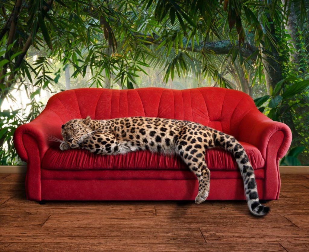 evolution feline cats sleep