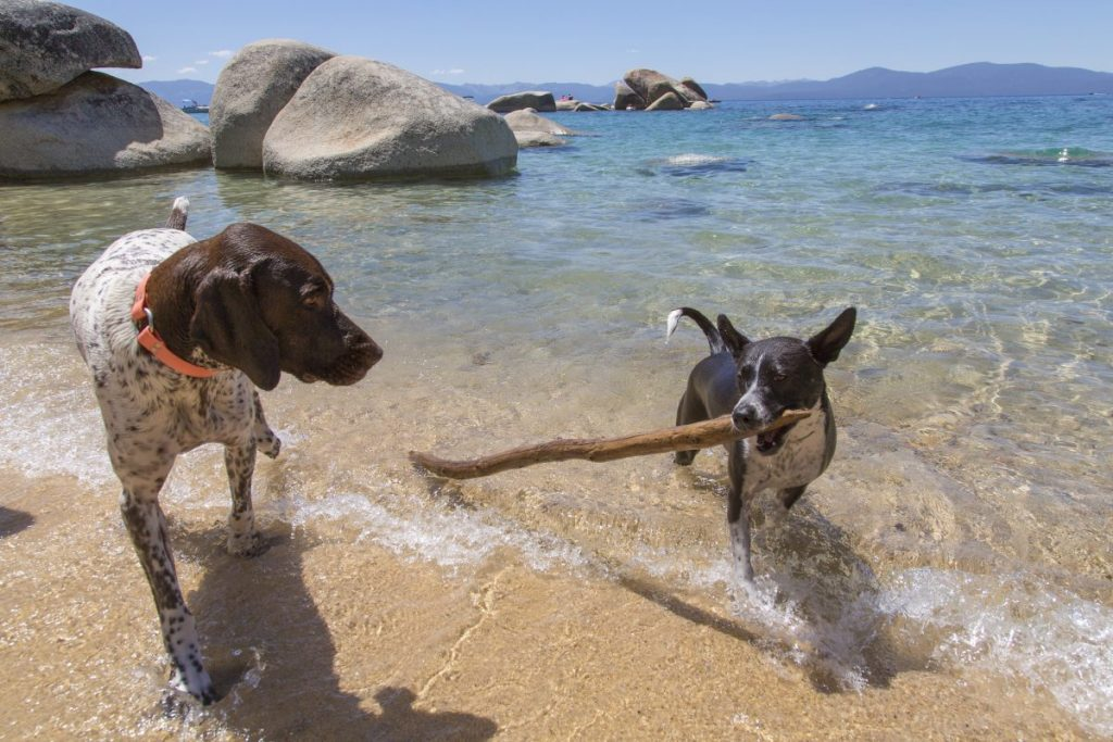 dogs Lake Tahoe beach