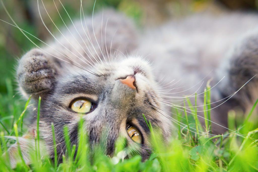 cute cat in grass