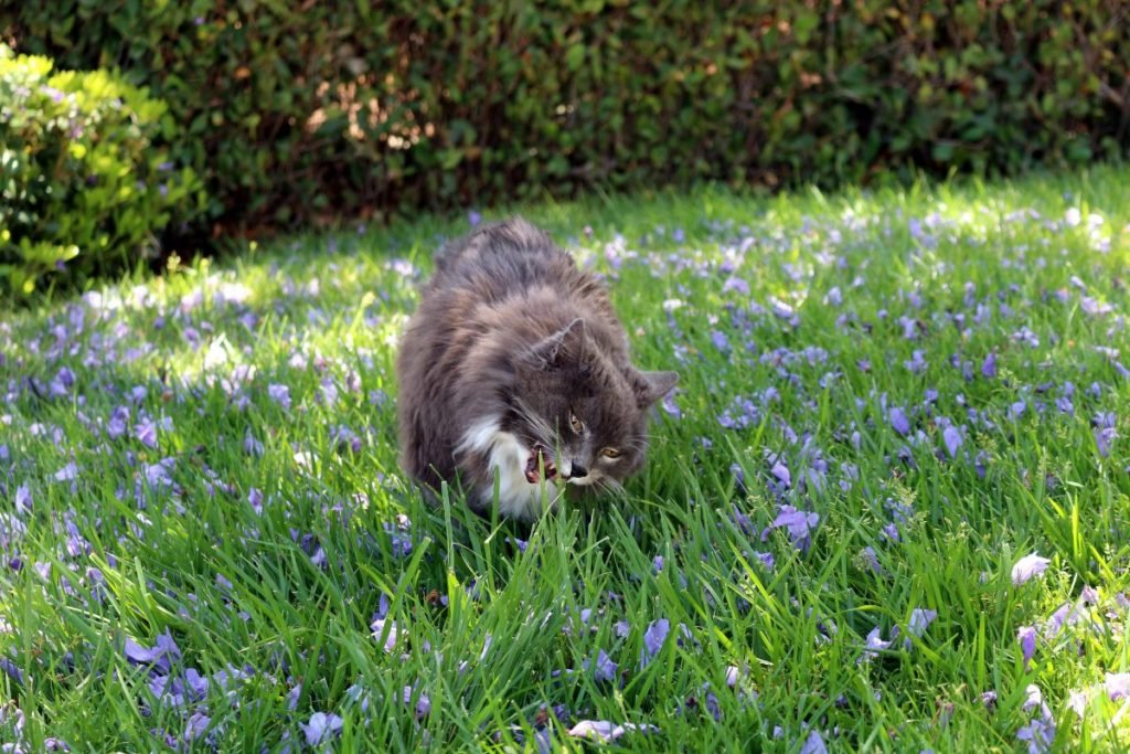 Cat eating grass among wildflowers
