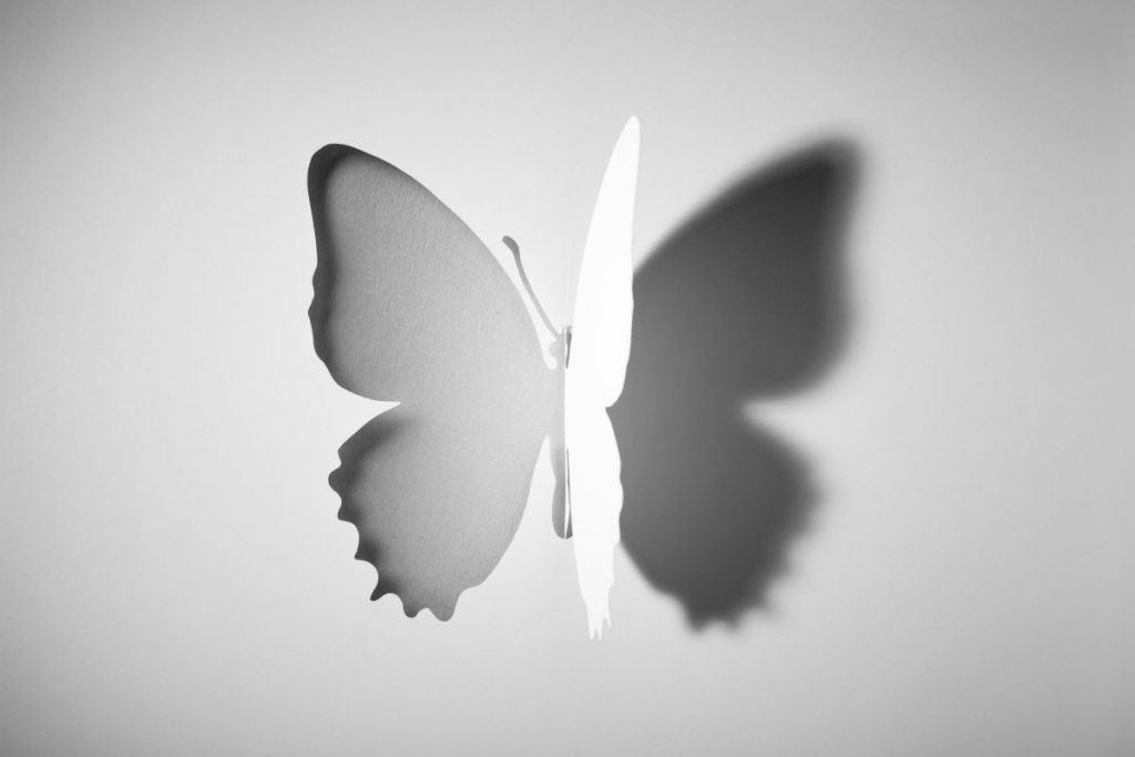 Shadows of a butterfly