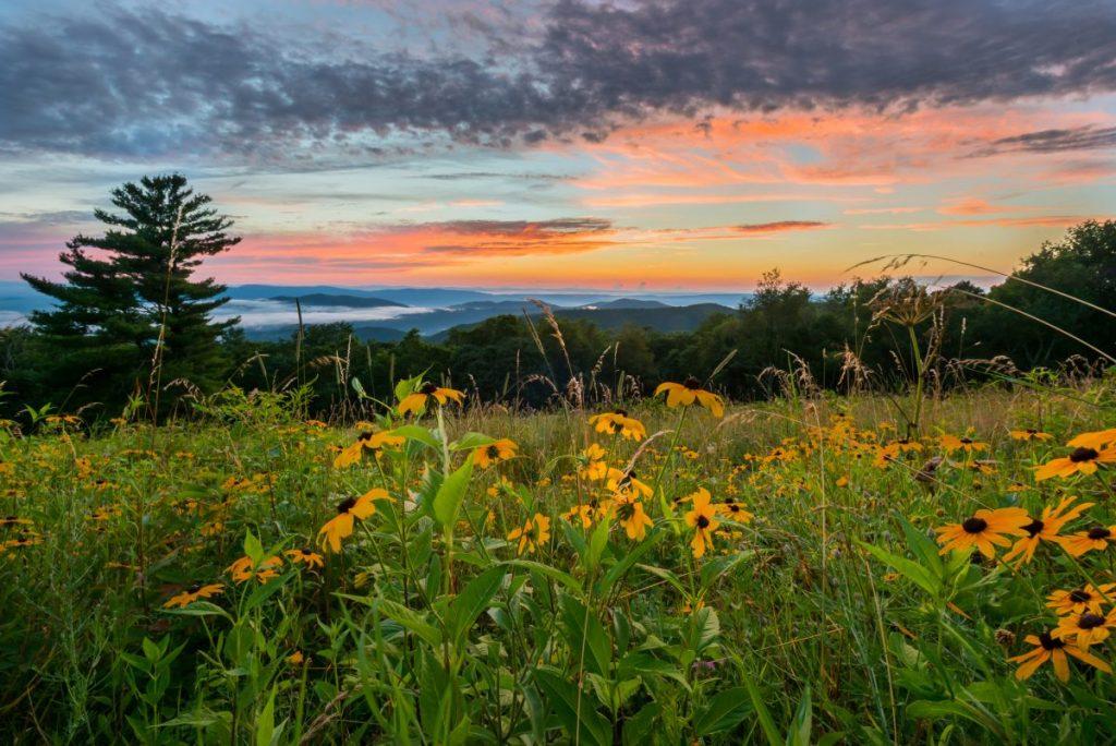 Wildflower meadow in Virginia