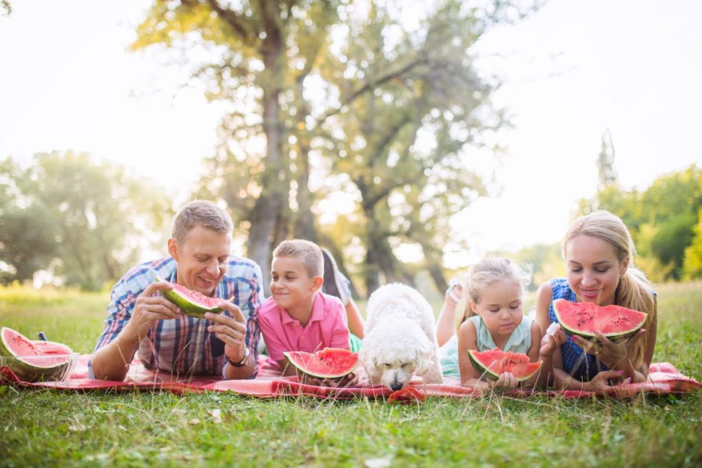 Family enjoying watermelon