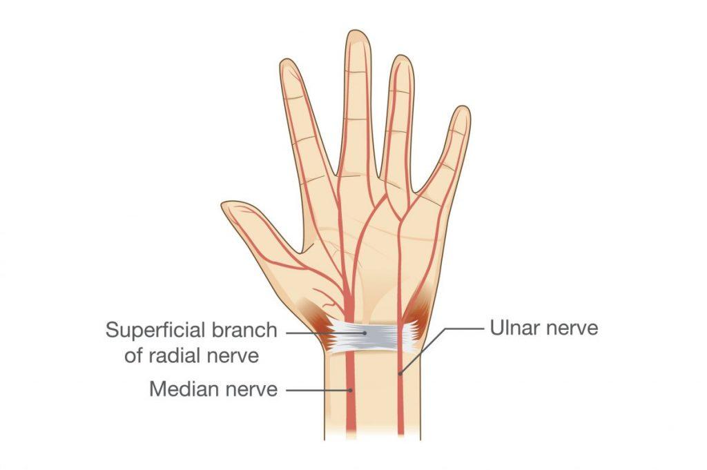 hand, ulnar nerve, elbow