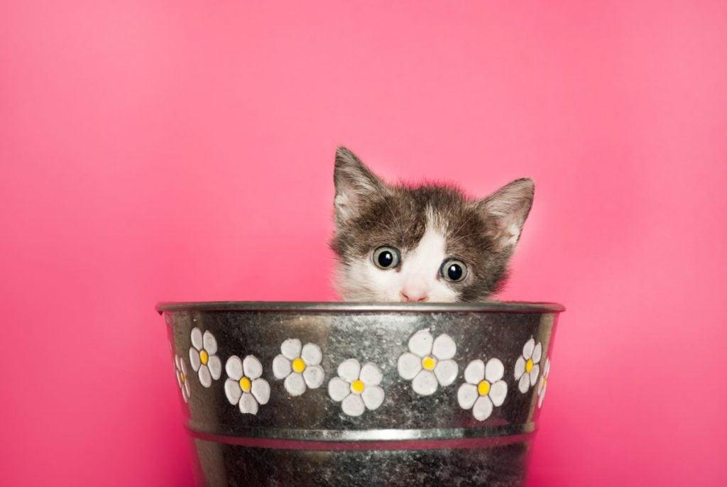 Kitten in flower pot