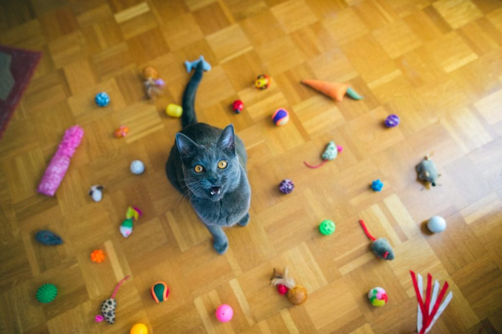 Meowing - a cat's second language