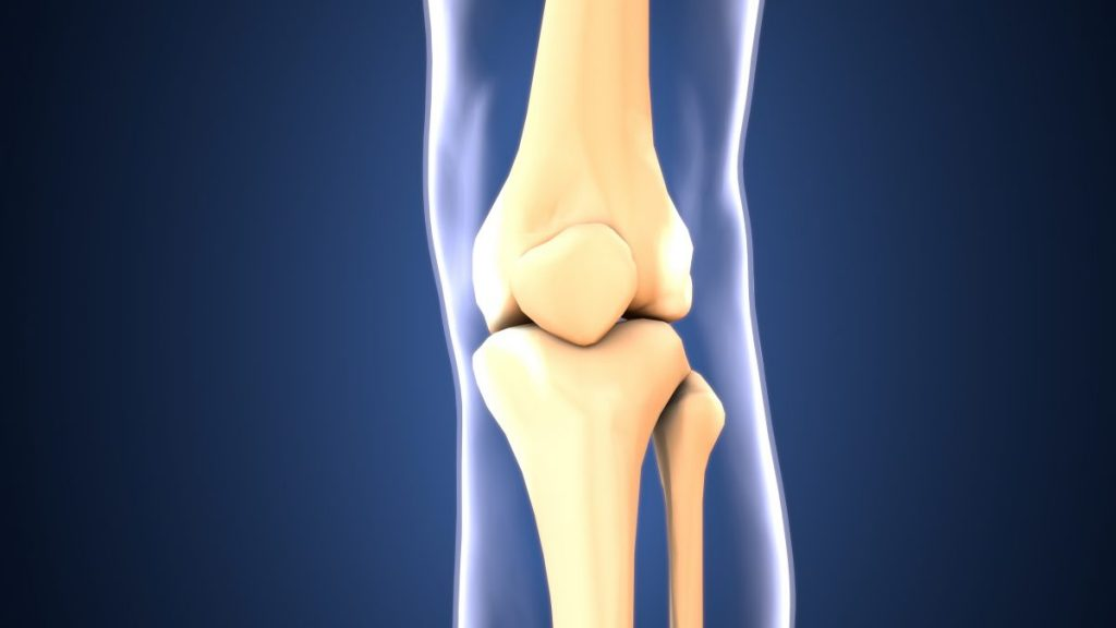 patella knee