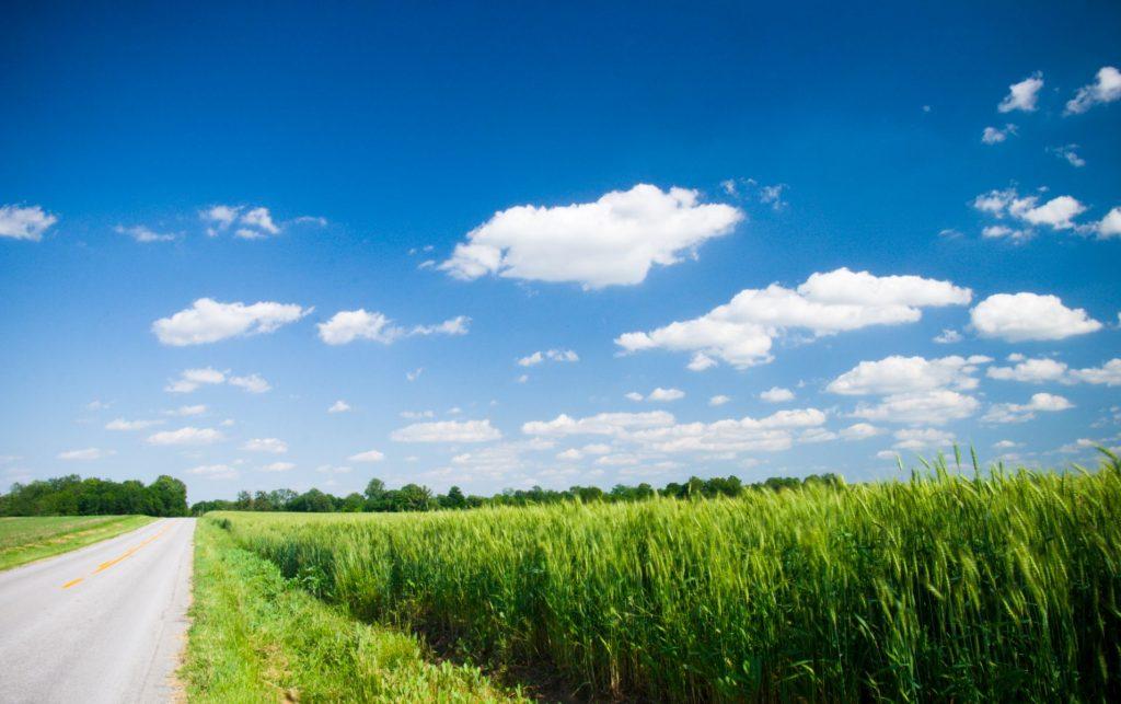 Green fields kentucky