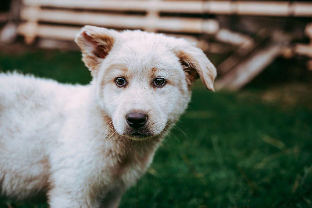 mutt puppy