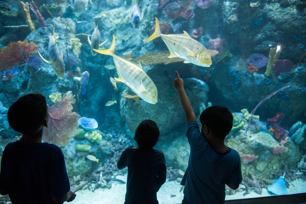 Kids watching the aquarium full of sea creatures at the The Aquarium of the Pacific in Long Beach