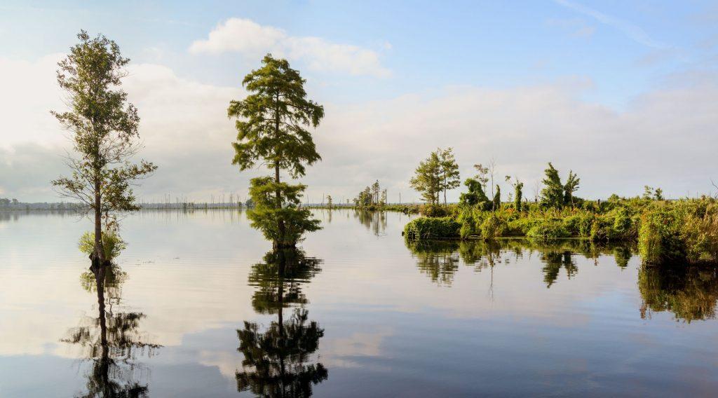 Lake Drummond Virginia