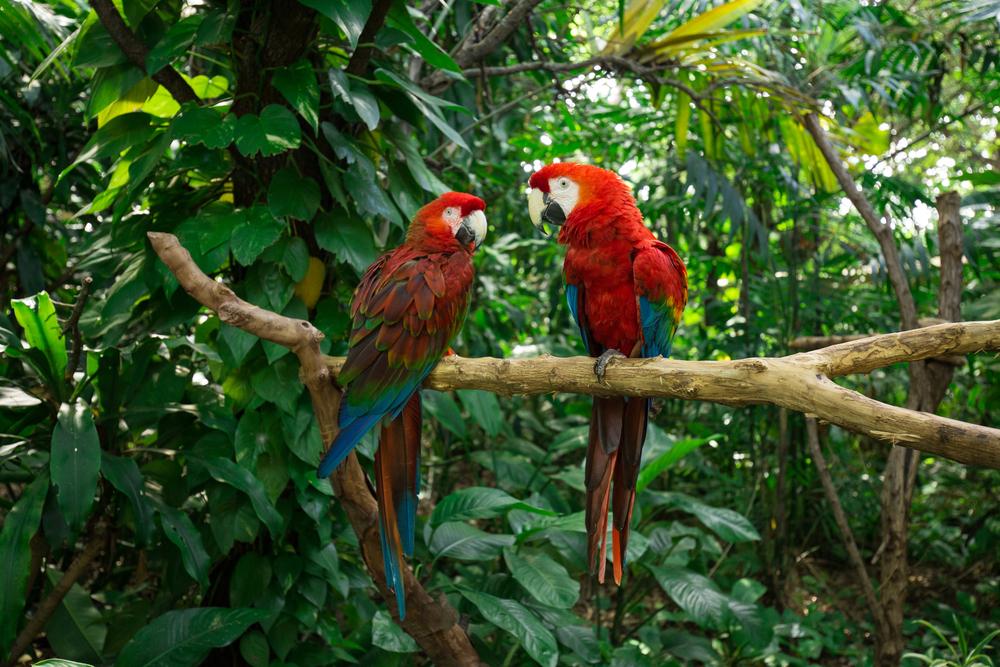 Parrots - Jungle Island, Miami, Florida