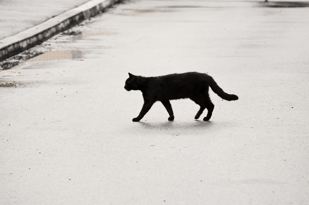 Black cat crossing the road
