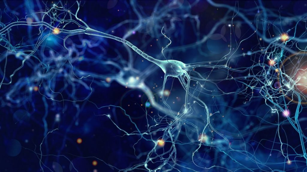 neuron receptors brain message relay