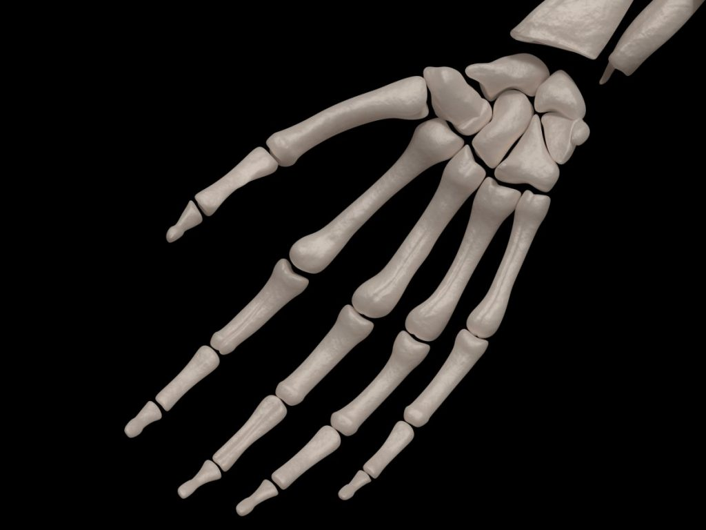 carpal fingers