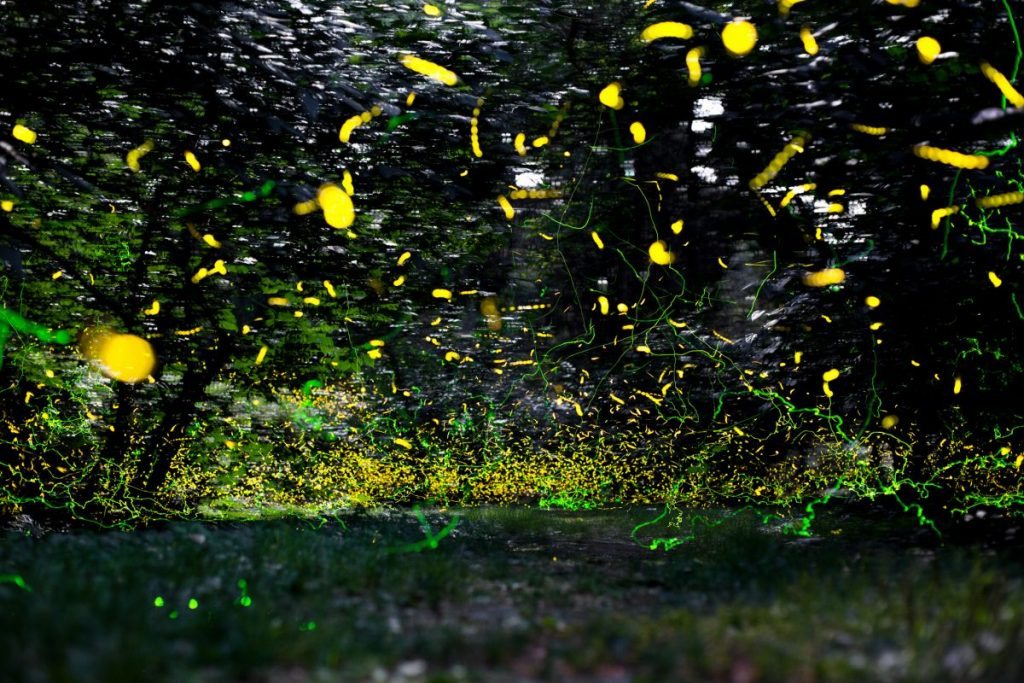 fireflies in the woods