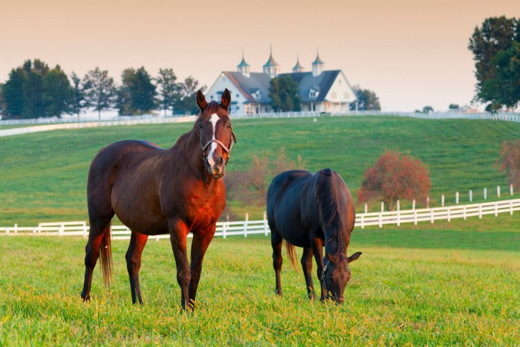 Horses in the fields on a farm in Lexington, Kentucky
