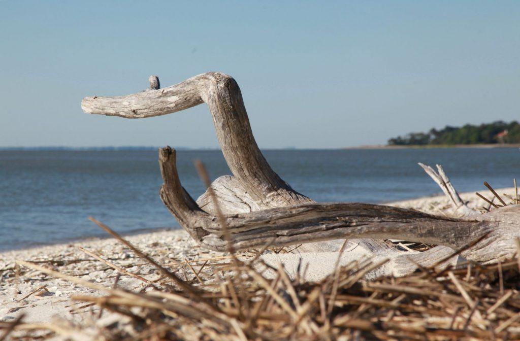 Driftwood - Daufuskie Island SC
