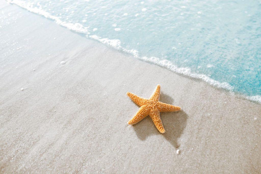 Starfish on the beach in Hilton Head, South Carolina
