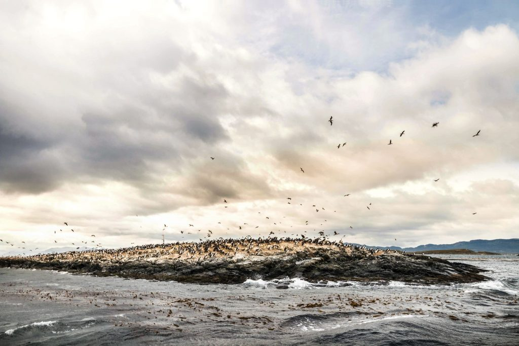 King Cormorant Bird Colony on Small Rock Islandi n Patagonia