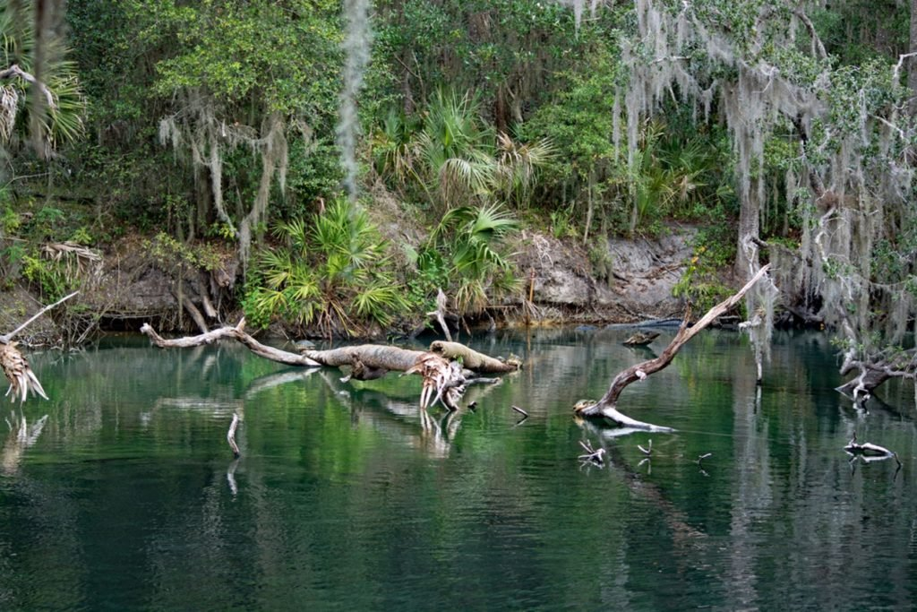 Blue Spring State Park is a state park located west of Orange City, Florida in the United States