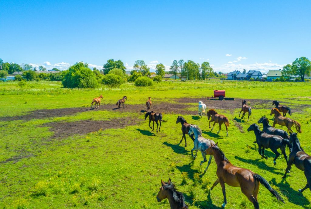 Aerial view of the beautiful horses