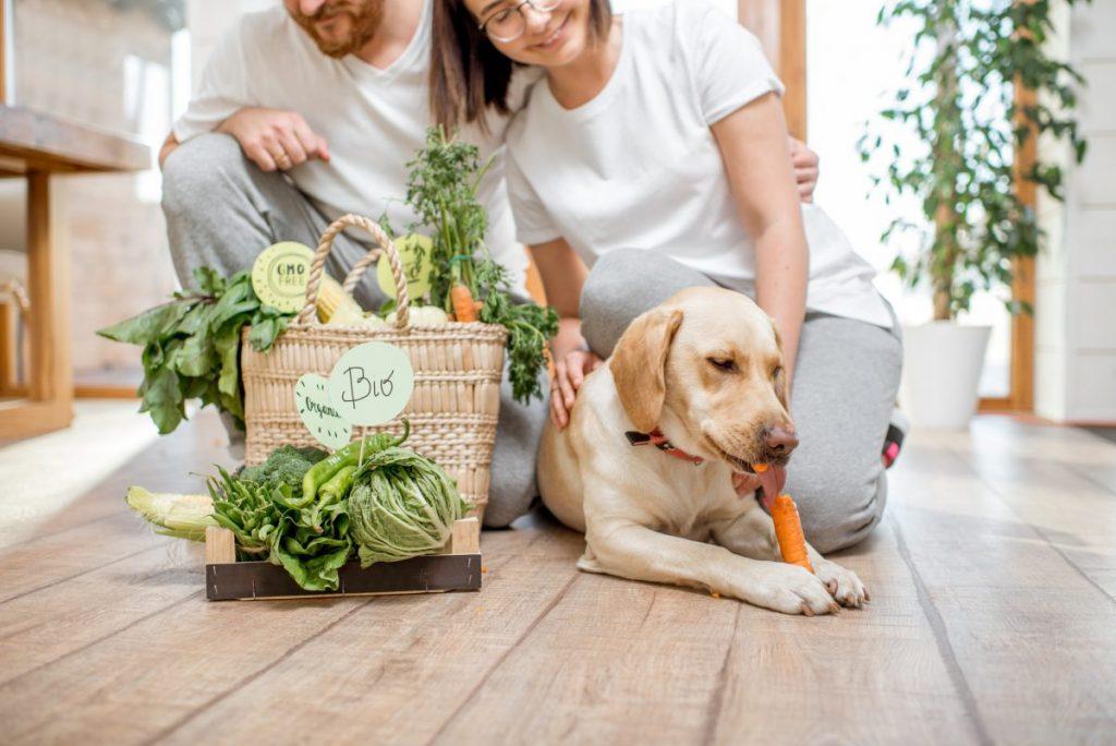 Dog raw carrot healthy teeth